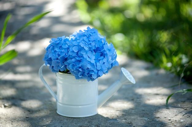 庭の自然な背景にじょうろの青いアジサイ