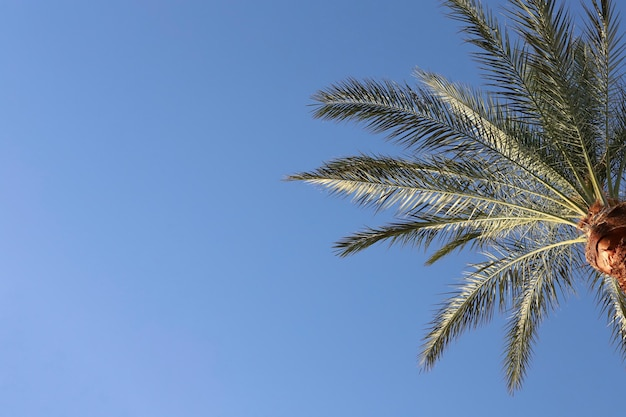 Blue isolated background with palm branches in the tropics