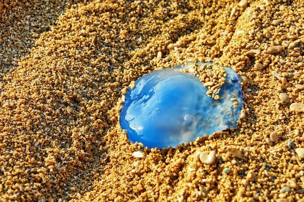 Голубая медуза на берегу моря