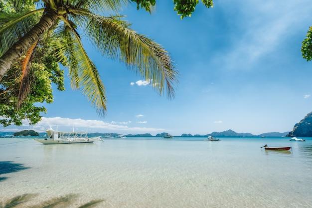 Blue lagoon with palm trees on tropical beach . el nido, palawan, philippines