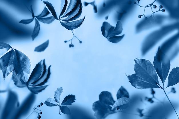 Синие листья и ягоды левитируют на синем фоне. прозрачная воздушная цветочная рамка, копия пространства