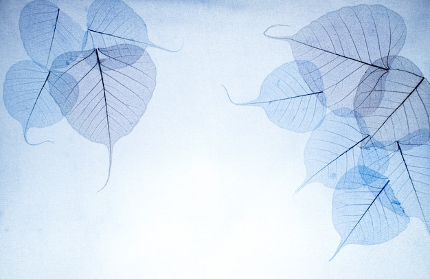 Blue leaves a bright background