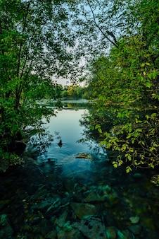 秋の森の底に岩がある青い小さな川