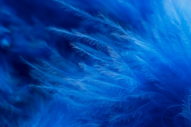 羽と青い月曜日のコンセプト構成