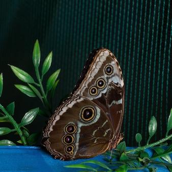 網の上にとまる青いモルフォ蝶。自然の美しさ。