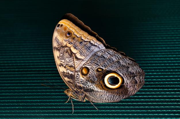 블루 모토 나비 그물에 자리 잡고 있습니다.