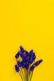 Blue muscari flowers on yellow