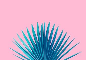 青い椰子の葉ピンクの背景に