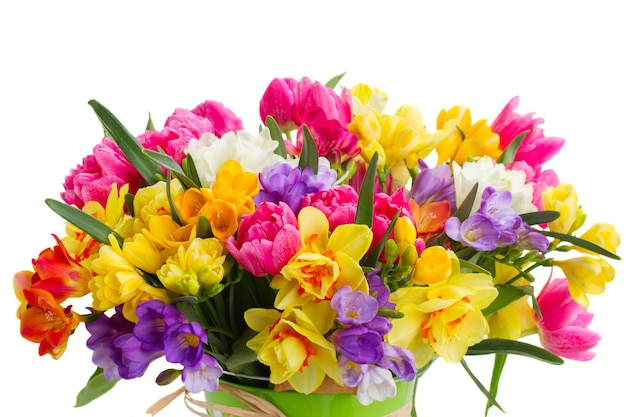 Синие, розовые и желтые цветы фрезии и нарциссы крупным планом на белом фоне