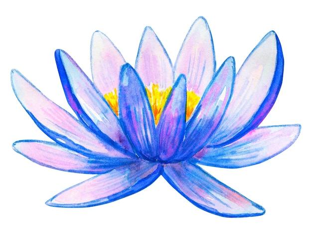 블루 핑크 수련. 손으로 그린 수채화 그림. 외딴.