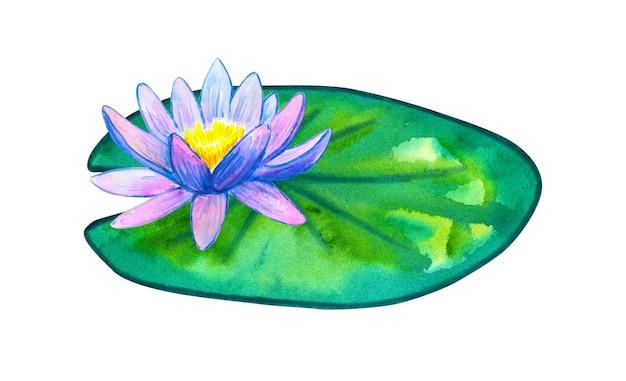 녹색 잎에 파란색 분홍색 수련입니다. 손으로 그린 수채화 그림. 외딴.
