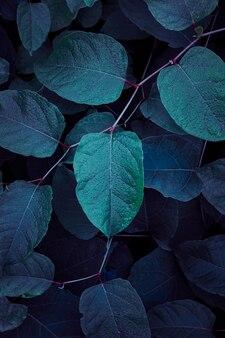 푸른 식물은 가을 시즌 파란색 배경에 자연에 나뭇잎