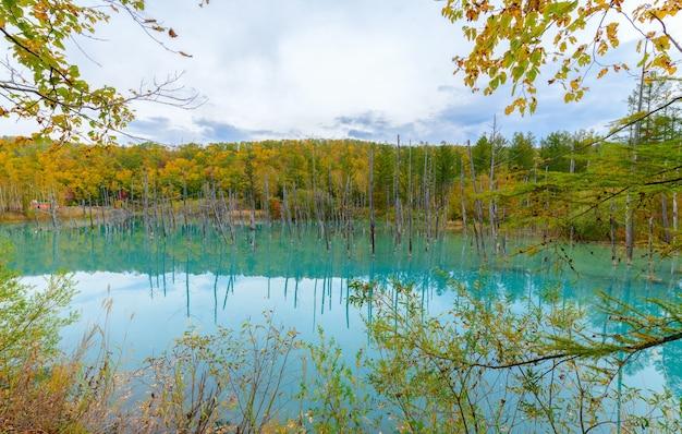Blue pond (aoiike) in biei, hokkaido autumn season