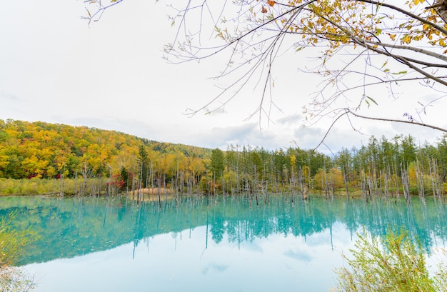 Blue pond (aoiike) in biei, hokkaido autumn season,