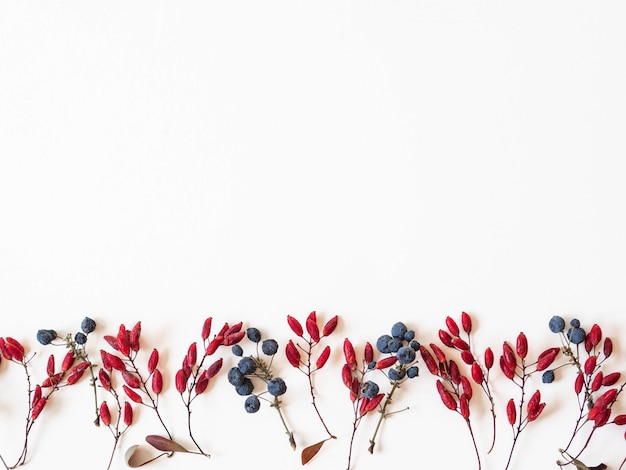Blue and red berries and leafs border isolated on white