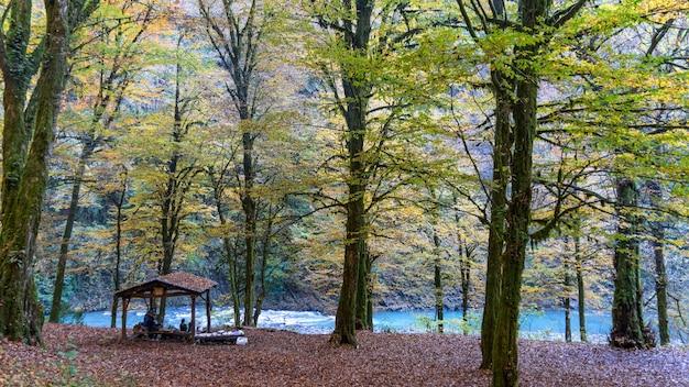Blue river in yew-boxwood grove in sochi, russia.