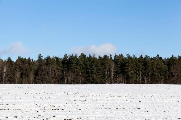 冬の青空と雪に覆われた森