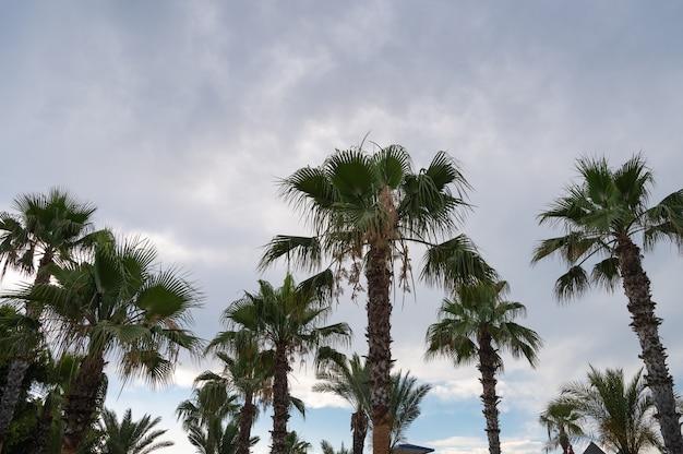 아래에서 본 푸른 하늘과 야자수. 고품질 사진