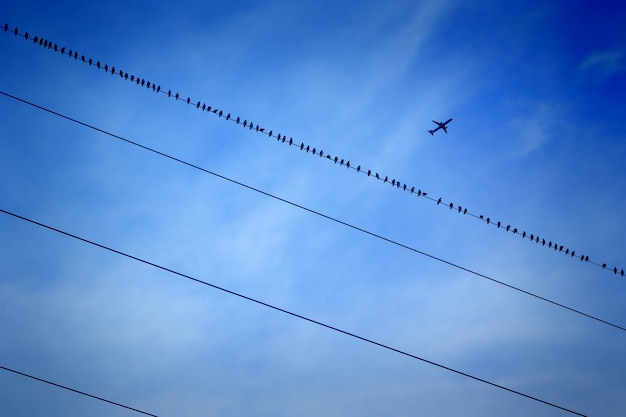 Голубое небо и самолет