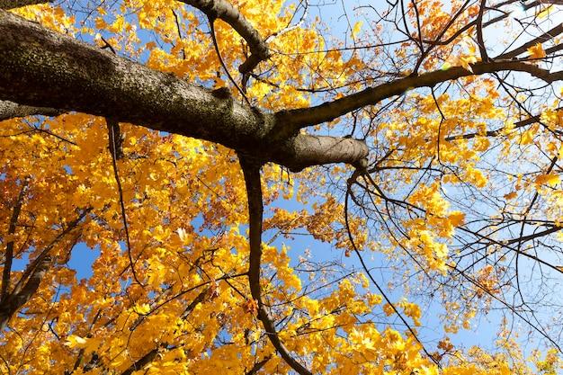 秋の青空と晴天、9月は落葉樹が黄葉に覆われる