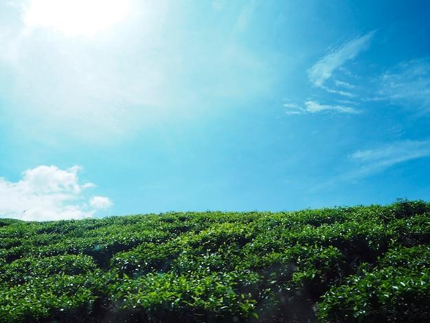 관목과 푸른 하늘 복사 공간