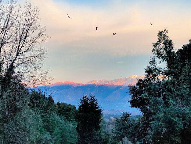 Blue sky snow mountains birds trees forest sun rays morning at dalhousie hill station in himachal pradesh india