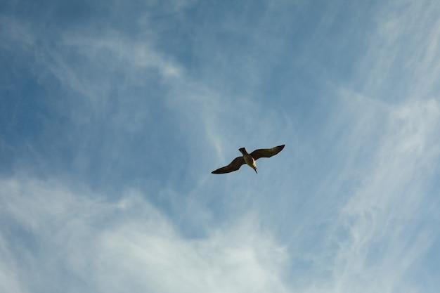美しい雲とカモメと青い空
