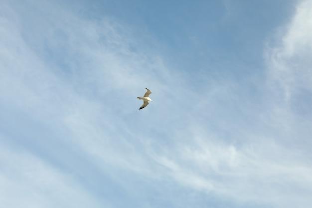 Голубое небо с красивыми облаками и чайка
