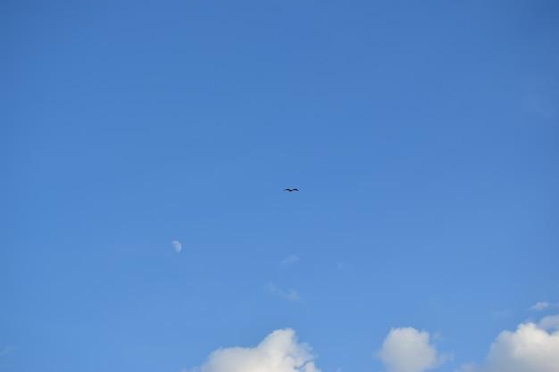 雲と鳥と青い空。日は晴れ、朝は天気がいいです。