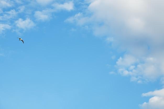 雲と青い空。空の背景