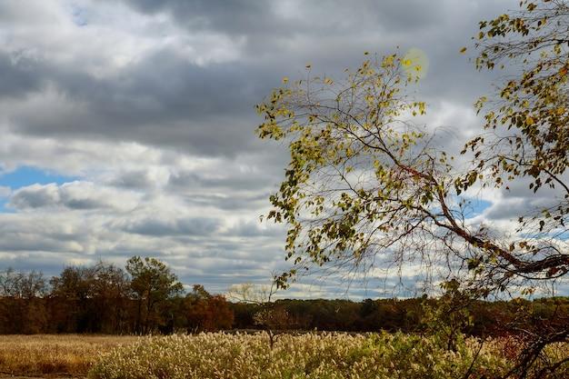 Голубое небо с облаками сквозь осенние кроны