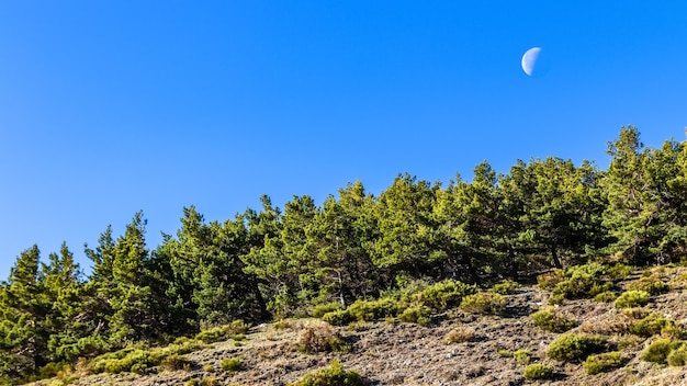 Blue sky with half moon by day and green trees. la morcuera, madrid. europe.