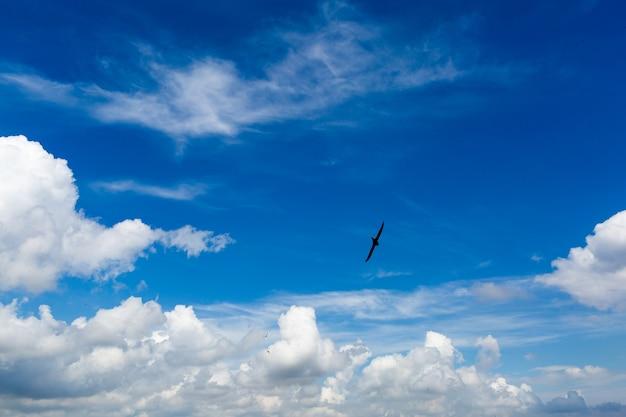 重い積雲と鳥のシルエットと青い空
