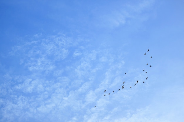 Blue sky with scattered clouds and a group of flying birds