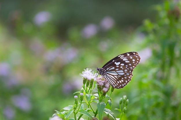 Голубая пятнистая бабочка из молочной муки