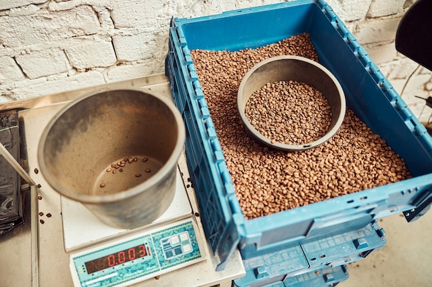 Blue storage container with brown arabica coffee beans and bucket on electronic scales
