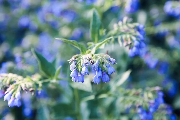 공원에서 푸른 여름 꽃입니다.