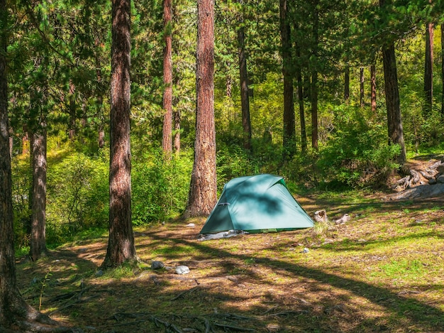 夏の森の針葉樹の下にある青いテント。丘の中腹にある針葉樹林の木の下にテントを張る。山の明るい青いテントのクローズアップ。秋の風光明媚な山の風景。