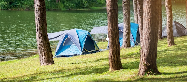 Blue tents camping under a pine forest and a lake