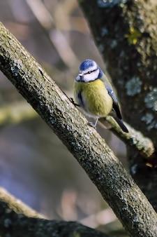 나뭇가지에 앉은 푸른 짹짹