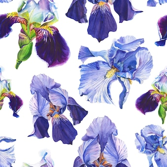 Blue and violet irises. watercolor flowers on a white background.