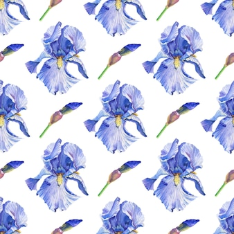 Blue. violet irises. watercolor flowers on a white background.