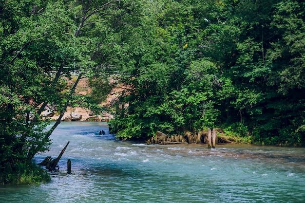 소나무와 숲의 호수에 푸른 물.