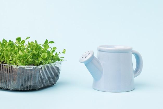 プラスチック容器に入った青いじょうろと苗。家で植物を育てる。