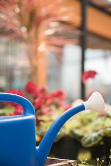 A blue watering can in front of blur flowering plants