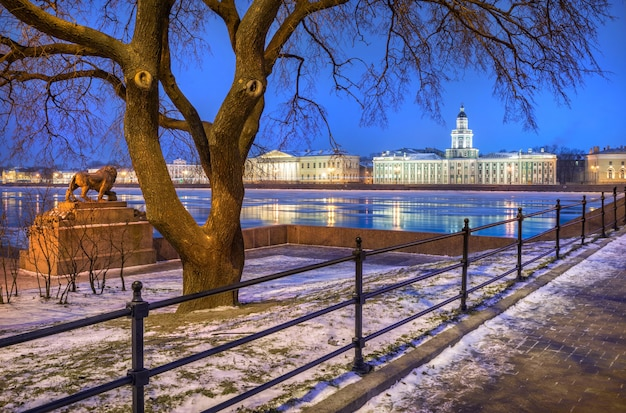 Голубое зимнее утро в санкт-петербурге с видом на кунсткамеру и льва на набережной.