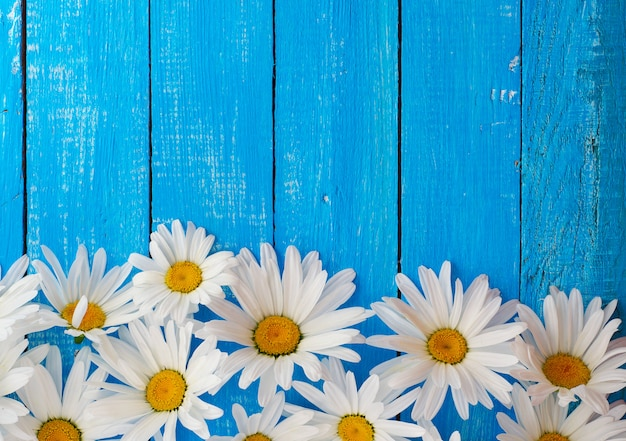 Blue wood background with white daisies