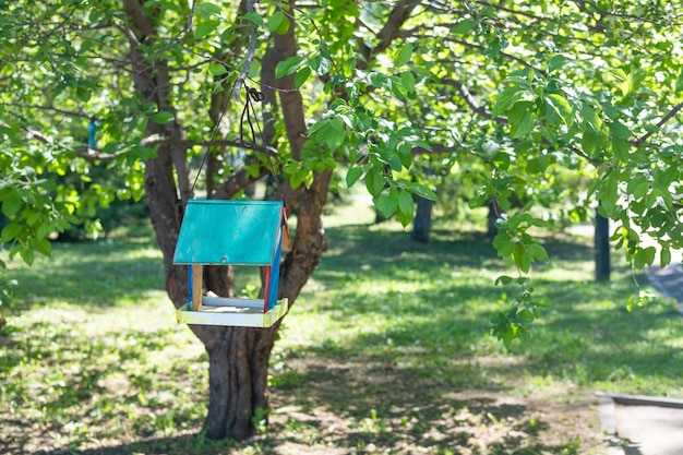 Blue wooden birdhouse hanging from tree with foliage blurred in background. bird house in the park
