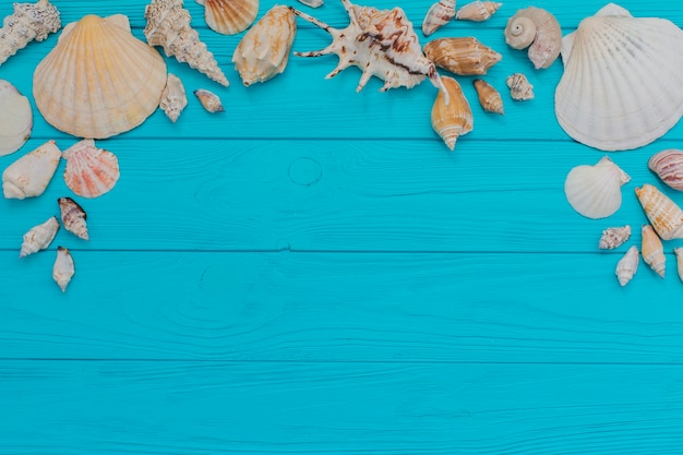 Blue wooden surface with fantastic seashells