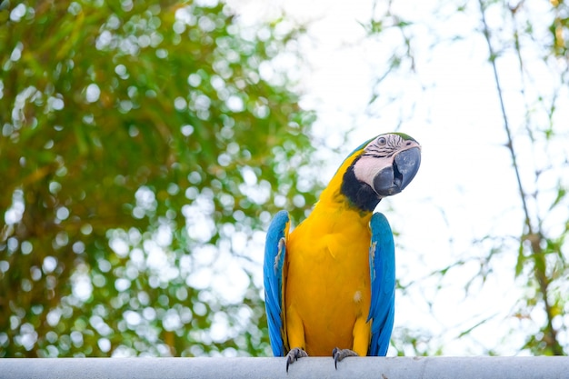 Blue and yellow macaws and white sky